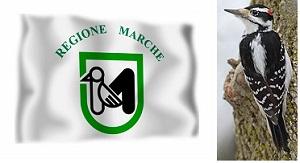 regiony-italii-marche
