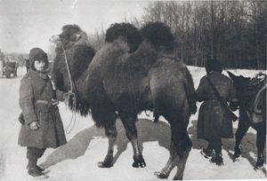 verblud-1942-43