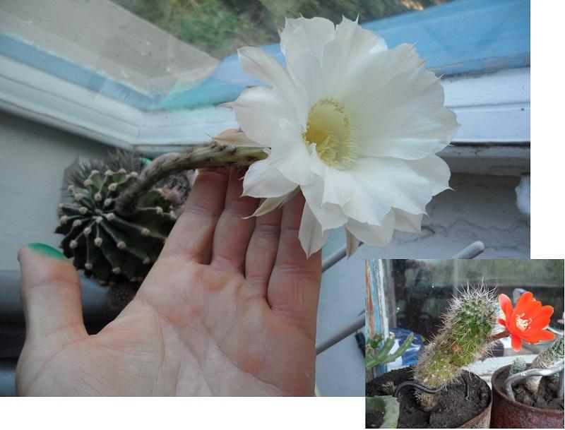 и даже кактусы мне дарит (1)