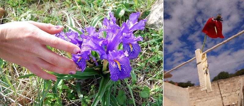 Остров Фавиньяна в Италии -- цветы