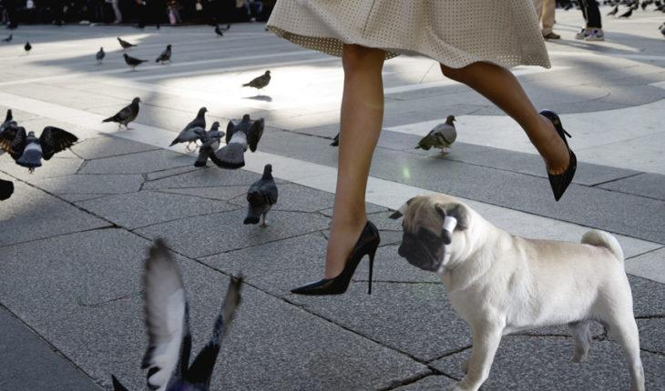 Собаки в Италии, животные в Италии